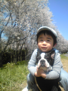 ♪ 庭と桜 ♪