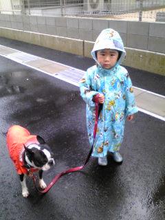 ♪梅雨散歩♪